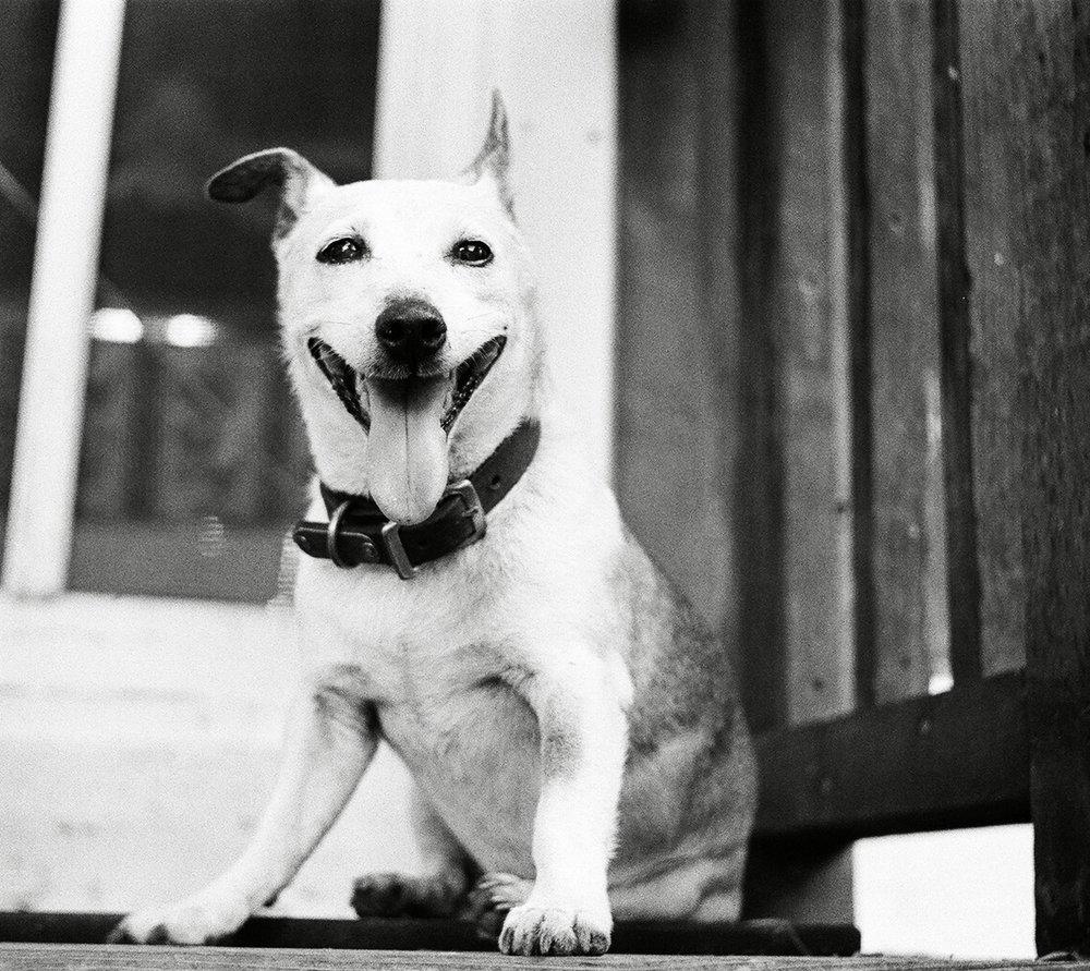 Dodd_Happydog