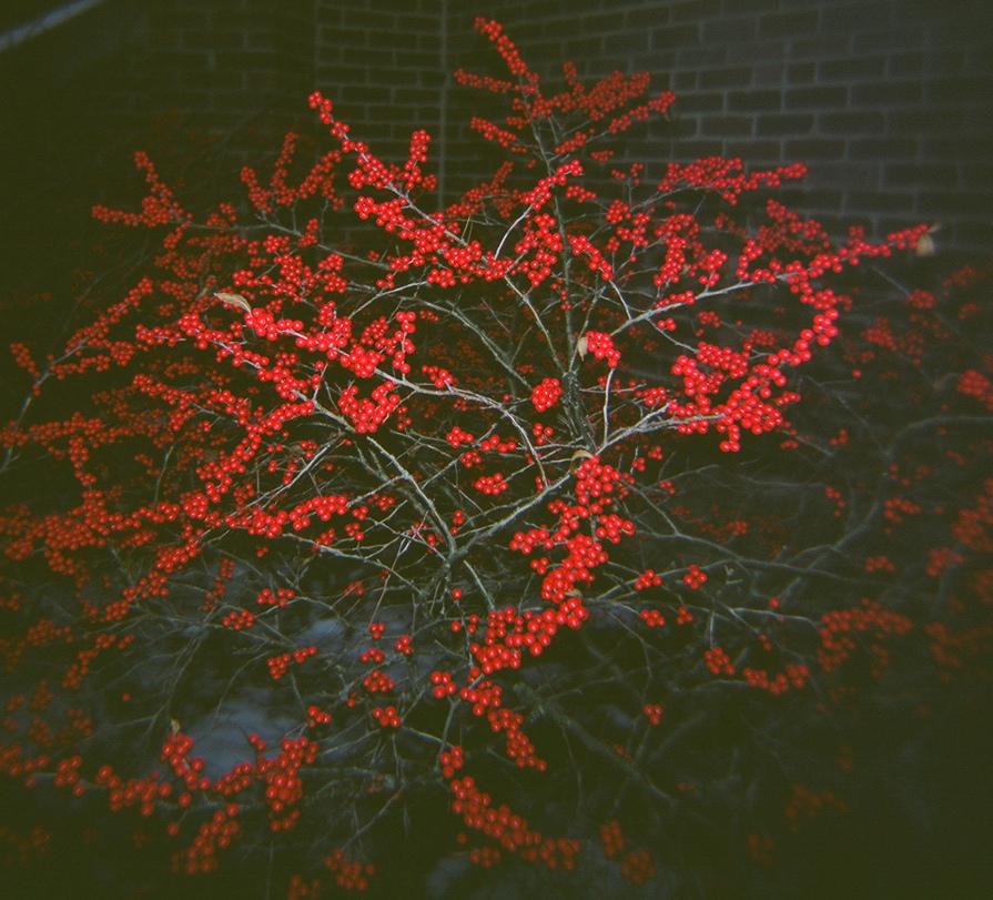 Dodd_Berries