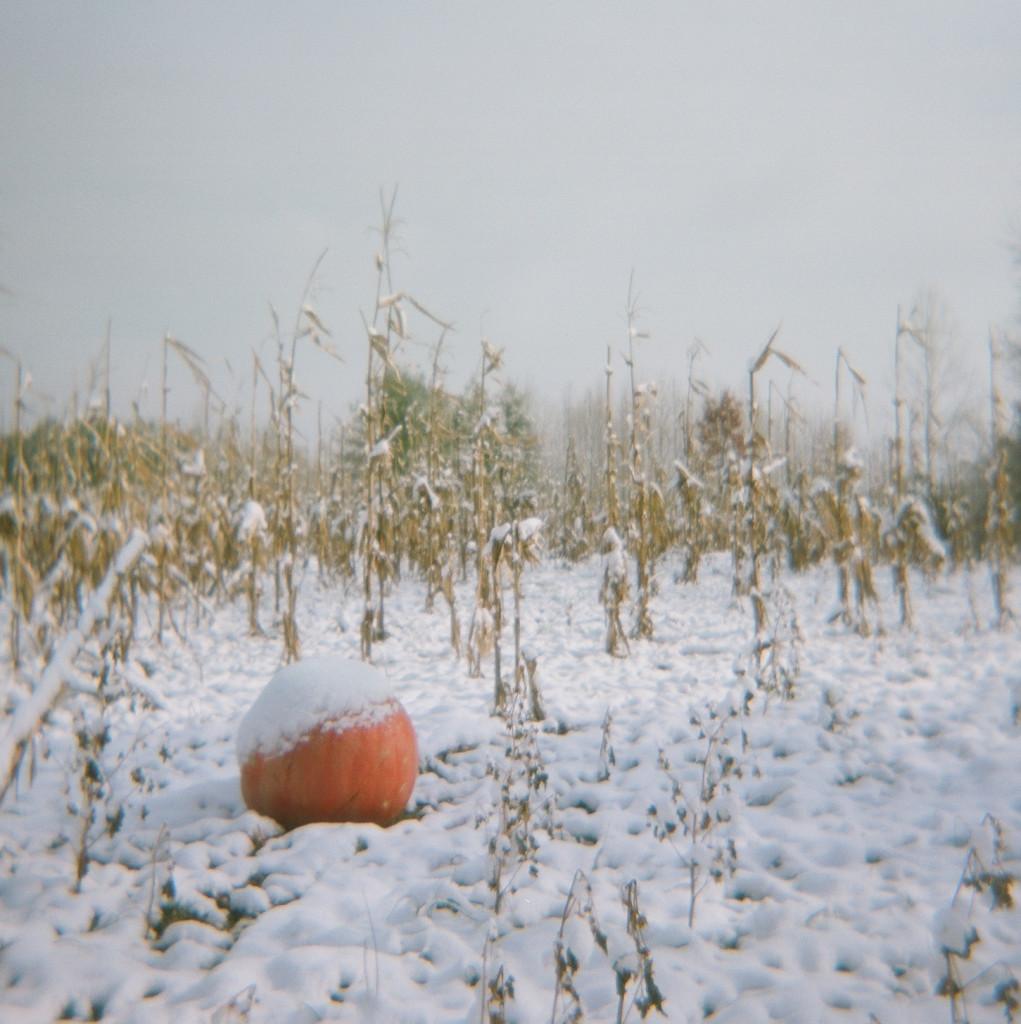 Dodd_Pumpkin