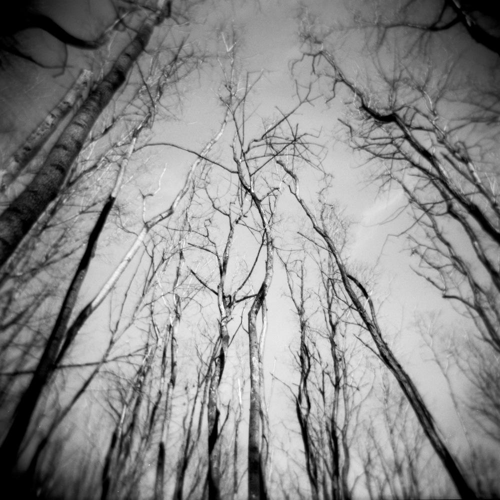 Dodd_Trees
