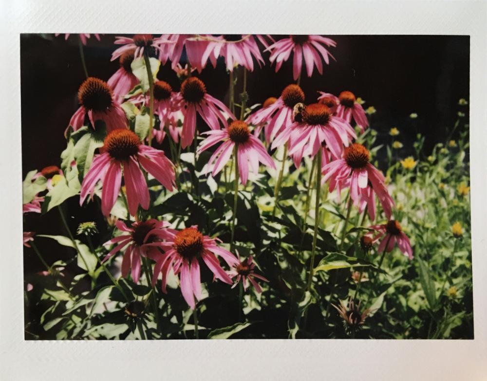 Dodd_Flowers
